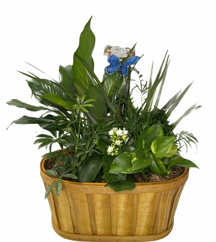 Tropical Dish Gardens