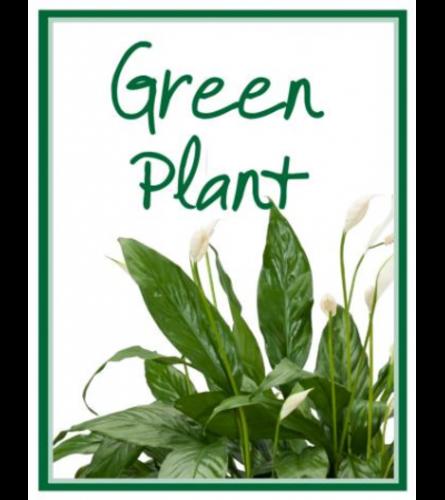 Designer's Choice Green Plant