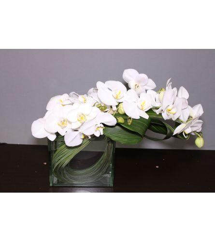 Orchid Modern Blisss