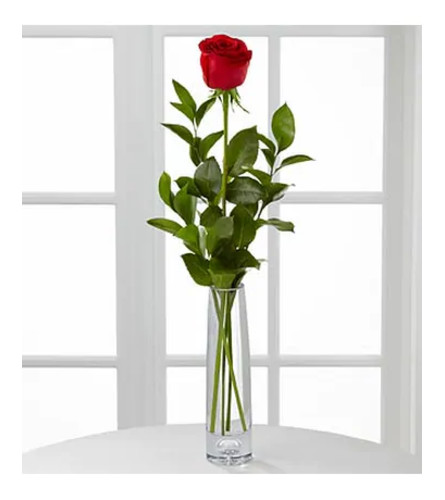 1 Rose Arranged in a Bud Vase