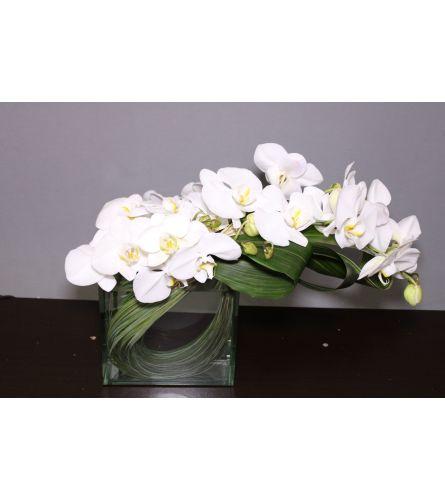 Orchid Blissss