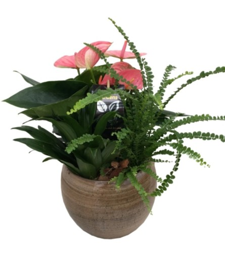 Tropical Mixed Planter