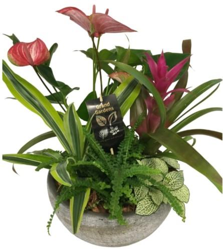Lush Tropical Planter