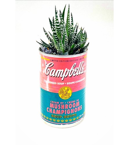 Succulent Vintage Can Series