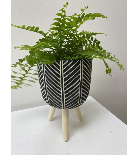 "Green plant in a tripod planter. *plants may vary. 4"" green plant"