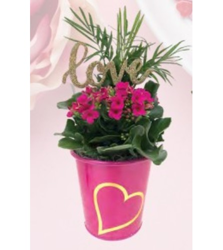 "5"" Heart Kalanchoe Planter"