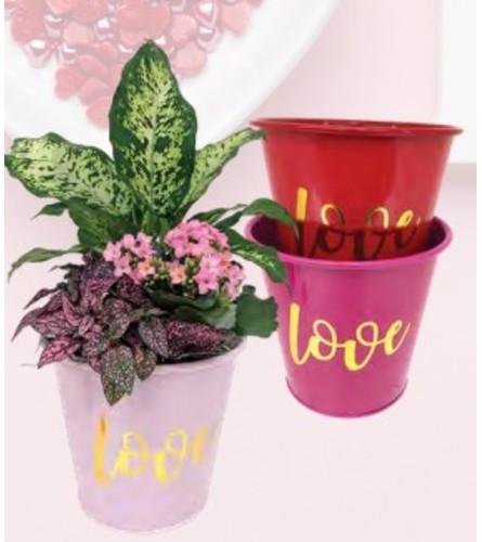 "8"" Kalanchoe Love  Planter"