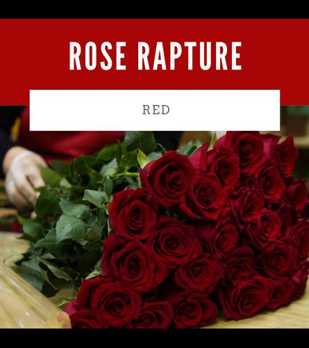 Rose Rapture Red
