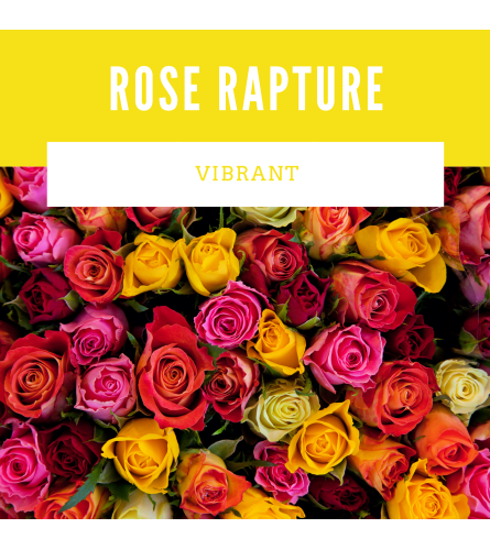 Rose Rapture Vibrant