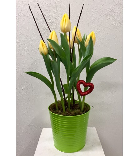 """""""Kiss with my Tulips"""" Plant"""
