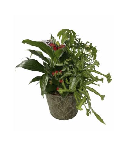 Metal Dish Garden planter