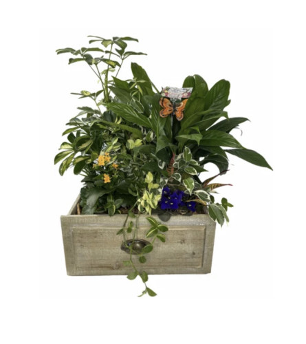 Plant assortment in wooden container