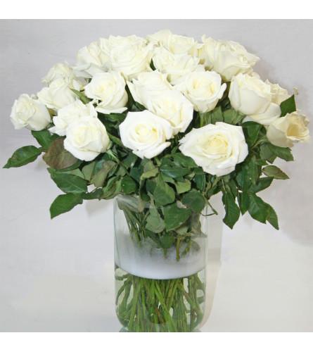 50 WHITE ROSES IN A VASE