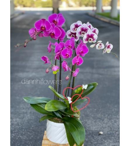 Orchids arrangement 2