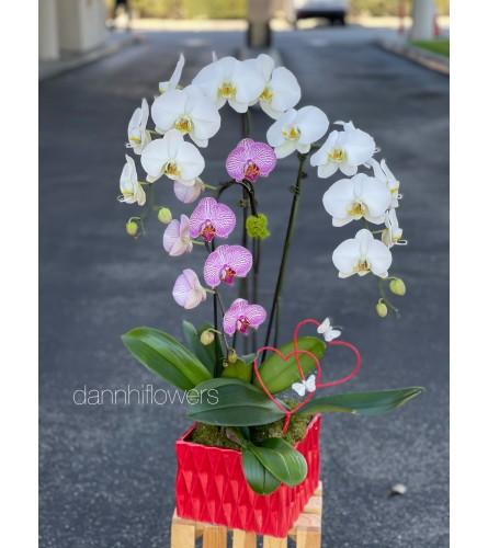 Orchids arrangement 3