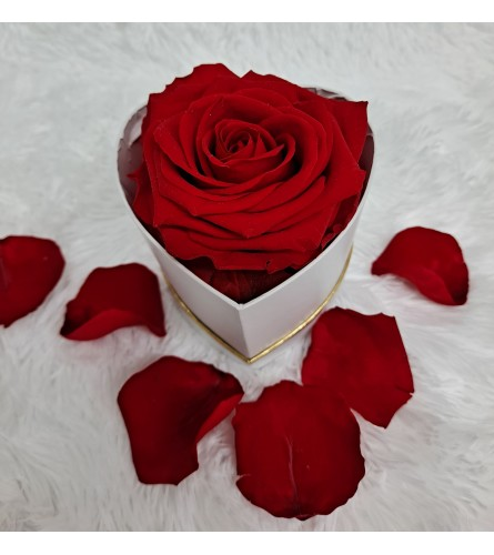 Single Preserved Red Rose in Heart Box