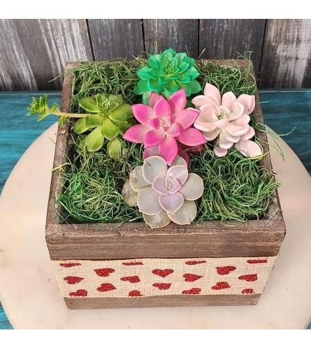Valentine succulent scape