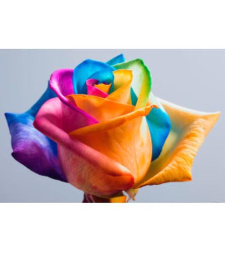 DOZEN RAINBOW ROSE BOUQUET