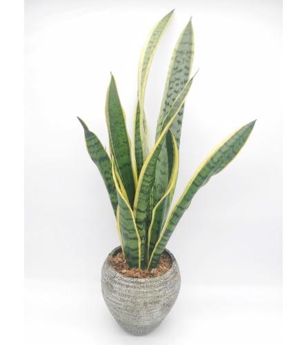 Sandy Sansevieria Planter