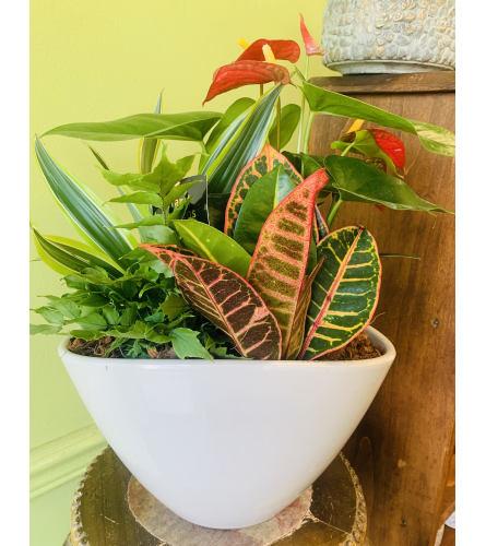 Large Anthurium Eillen Planter