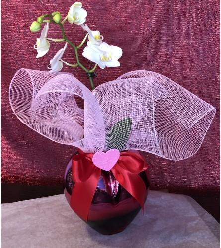 Loving orchid