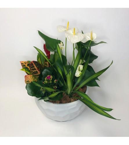 Blooming Tropical Garden