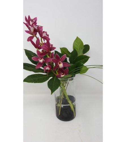 Smart Simply Orchid