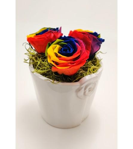 Eternal Rainbow Rose