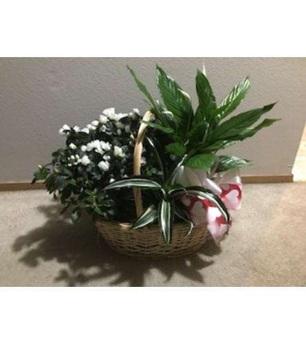European Plant Basket with white azalea