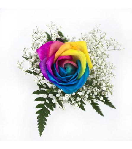 Single Rainbow Rose wrapped