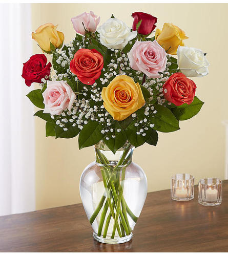 12 Mixed colour roses Vased