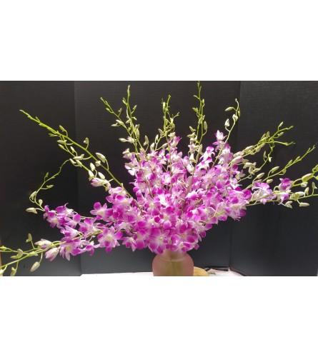Opulent Pink Orchids