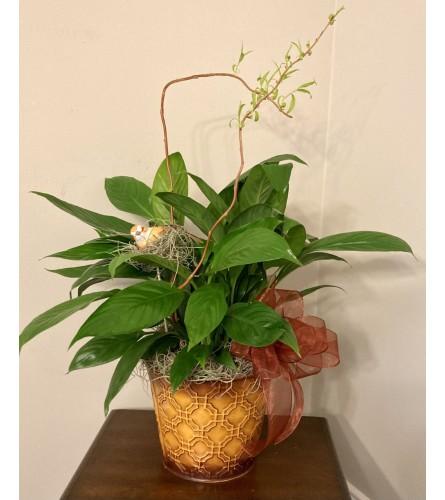Nesting Bird Peace Lily