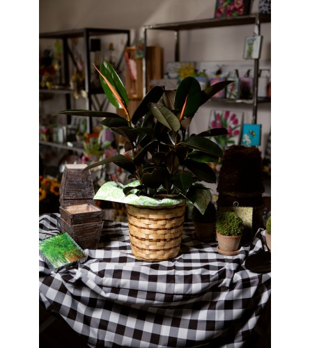 Rubber Plant by VBS