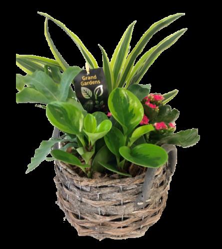 Round Wicker Tropical Planter