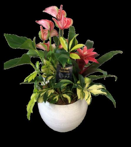Anthurium Bromeliad Planter