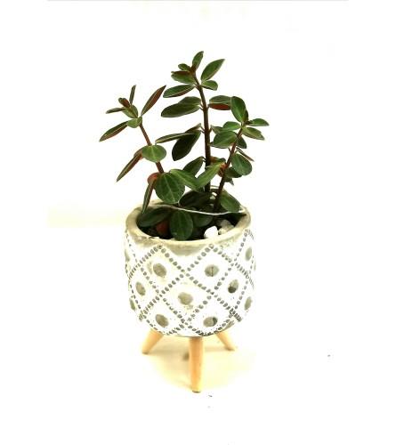 Miniature Houseplant