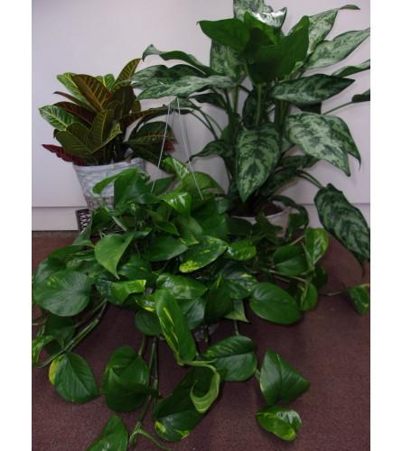 Green Plant - Let us choose!