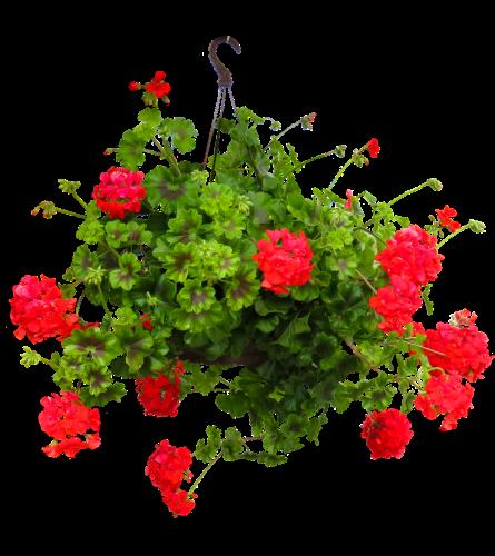 Spring Hanging Basket -1