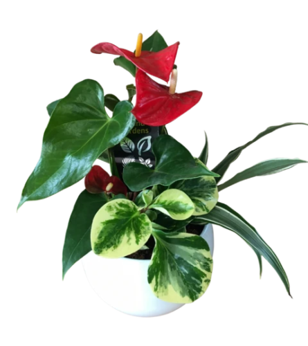 Flamingo Flower Planter