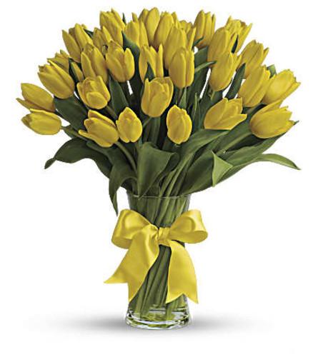 Spray if yellow tulips