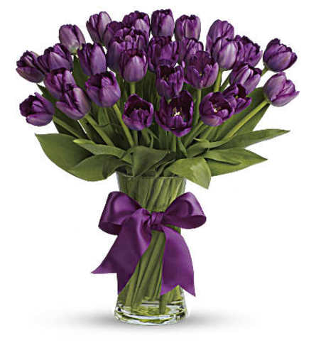 Spray of purple tulips