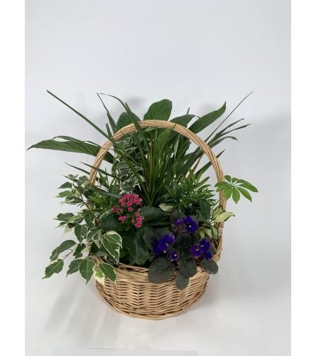 Basket full of greens