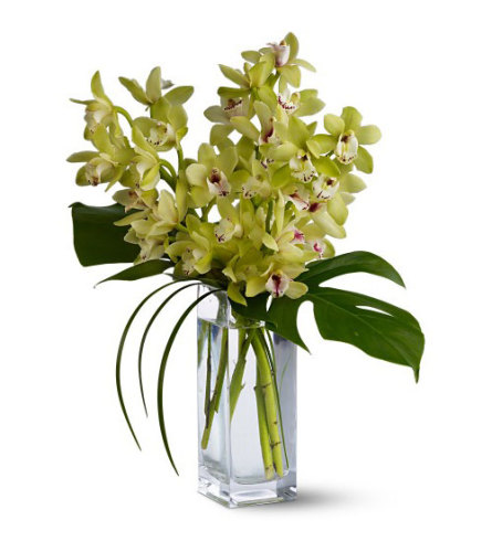 Orchid Elegance 2021