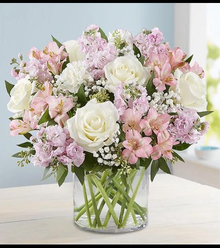 Blooms Blushing