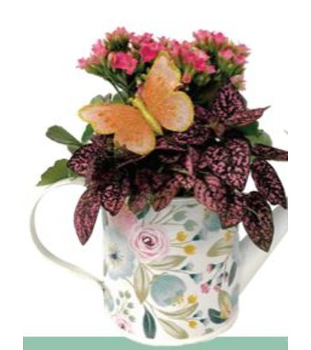 Darcy Watering Can Dishgarden