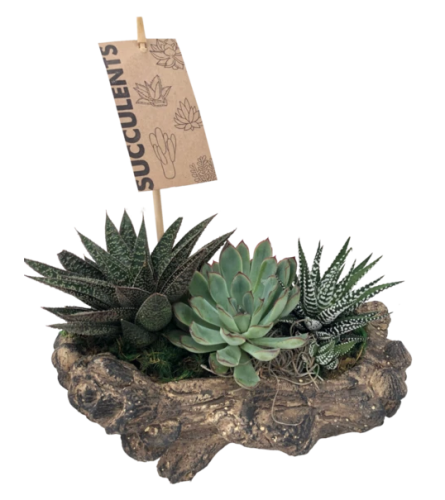 Log planter with Succulents