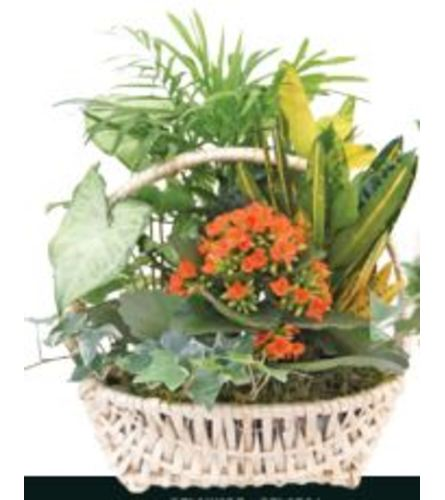 Delaware Garden Basket (Small)