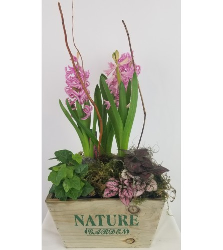 Nature Bulb in Wooden (limited time only)