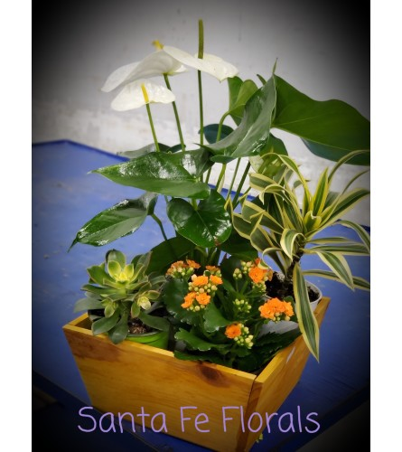 Custom plants